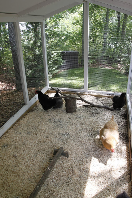 Tilly's Nest- chicken coop inside outdoor runwp