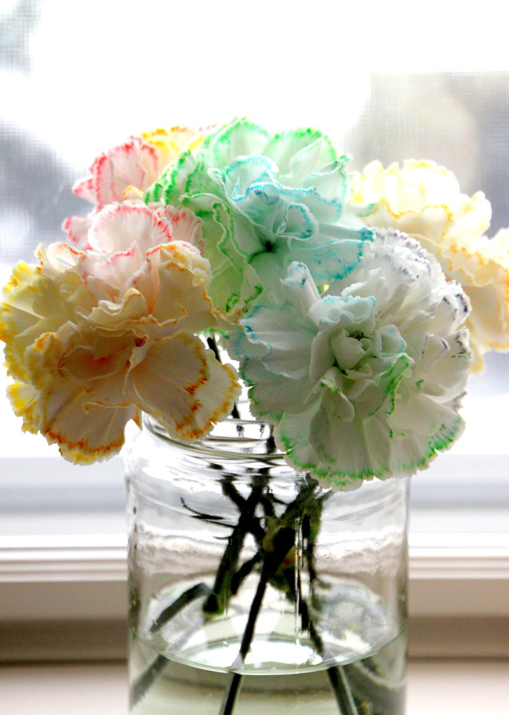 Tilly's Nest- colored carnations-001