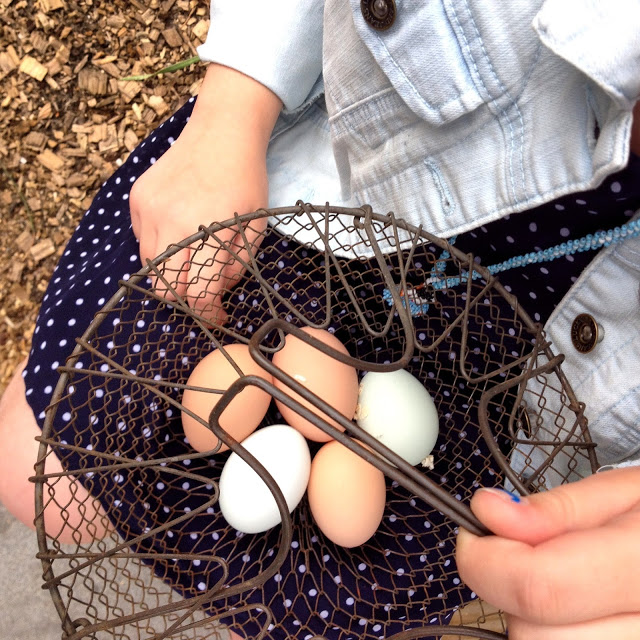 Tilly's Nest- eggs in basketwp