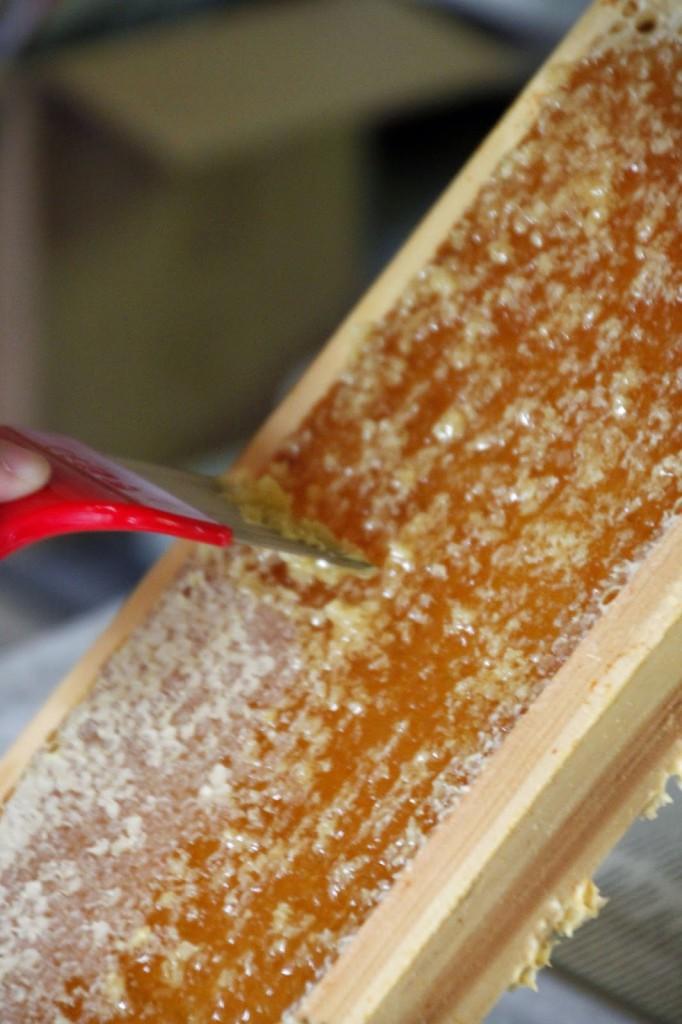 harvest honey