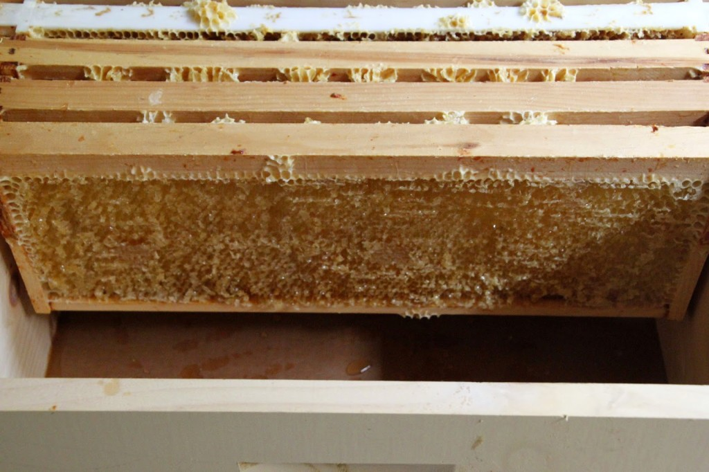 Tilly's Nest- honey harvest-012wp