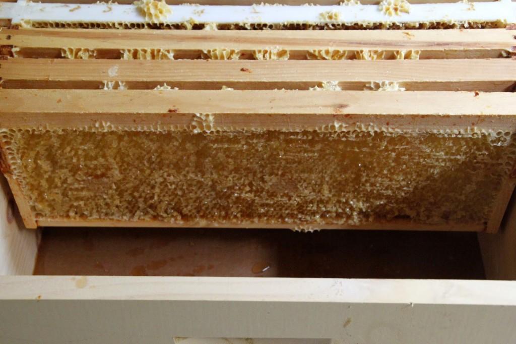 Tilly's Nest- honey harvest-012wp