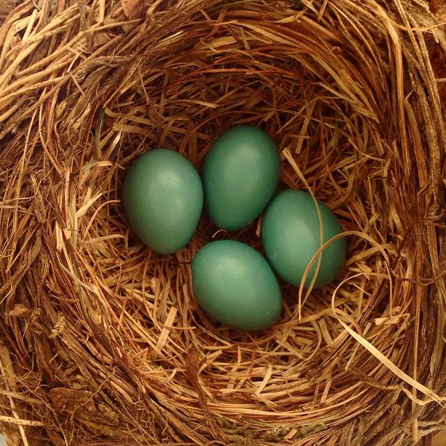 Umbrella Nest- Tilly's Nest