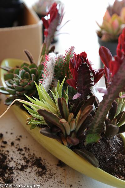 Tillys Nest- succulent arrangement (4 of 1)
