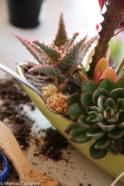 Tillys Nest- succulent arrangement (5 of 1)