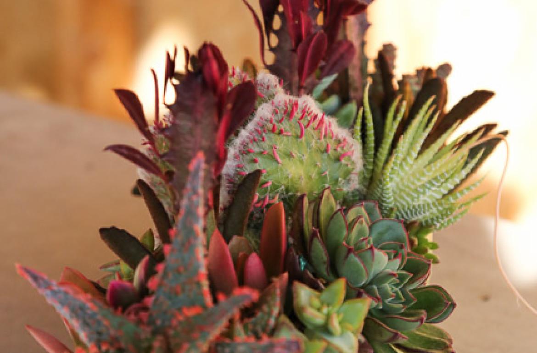 Succulent Arrangement   Tilly\'s Nest
