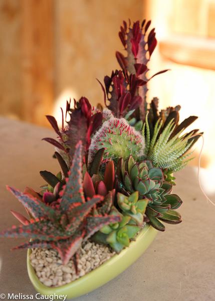 Tillys Nest- succulent arrangement (9 of 1)