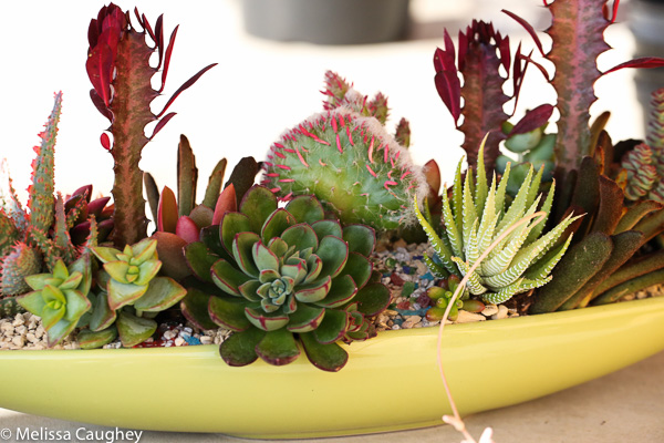 Tillys Nest- succulent arrangment (8 of 1)