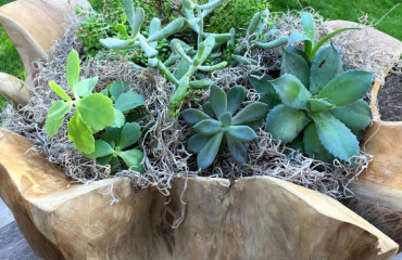 Tillys Nest- succulent teak planter