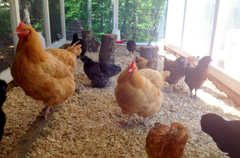 Tillys-Nest-the-flock