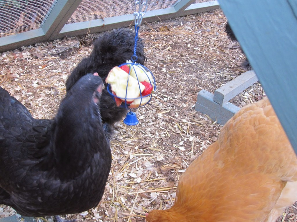 hanging boredom buster for chickens