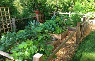 Tillys-Nest-vegetable-garden
