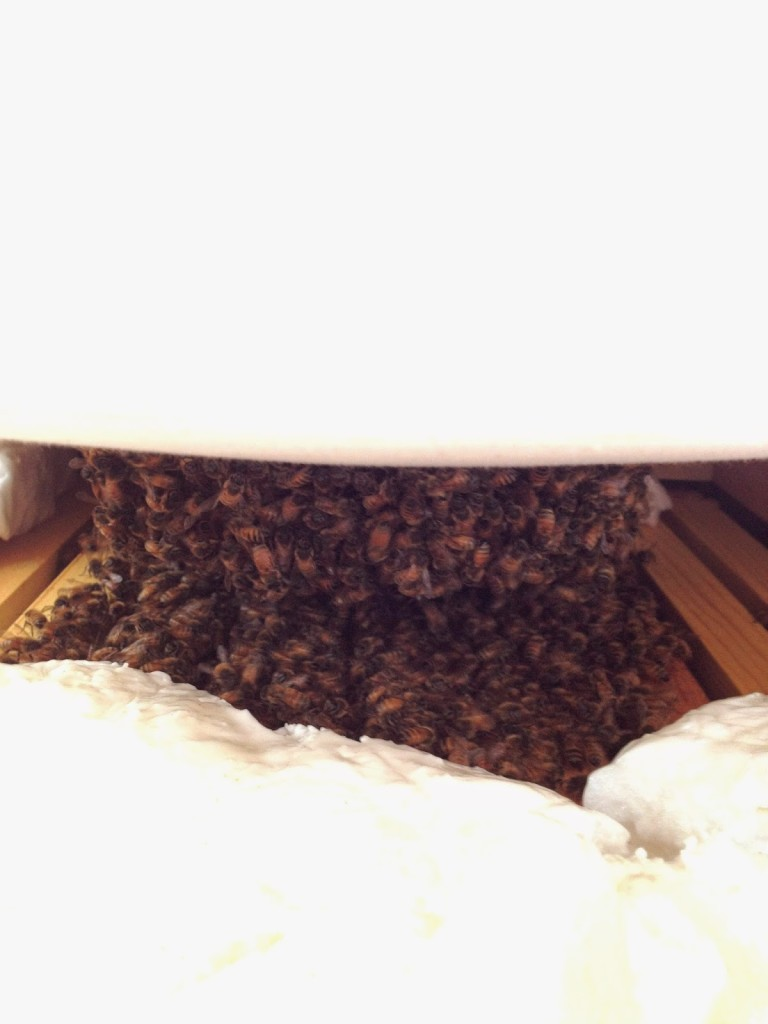 winter honeybee cluster
