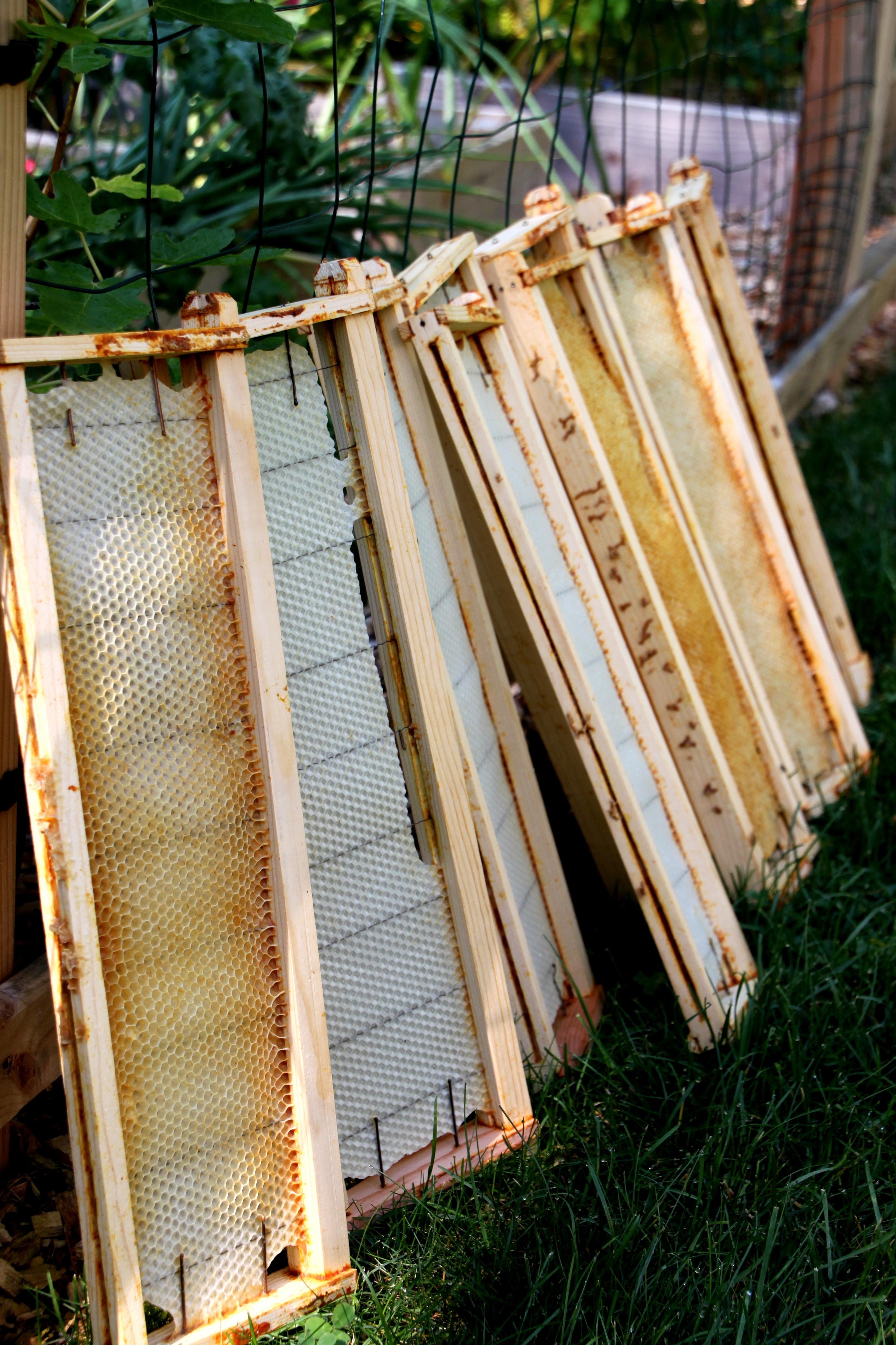 Tillys nest bobby pin beehive frames