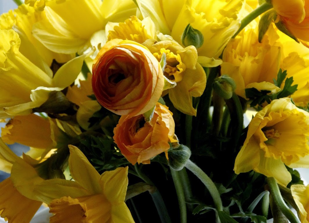 Tillys-nest-daffodils-and-ranunculus