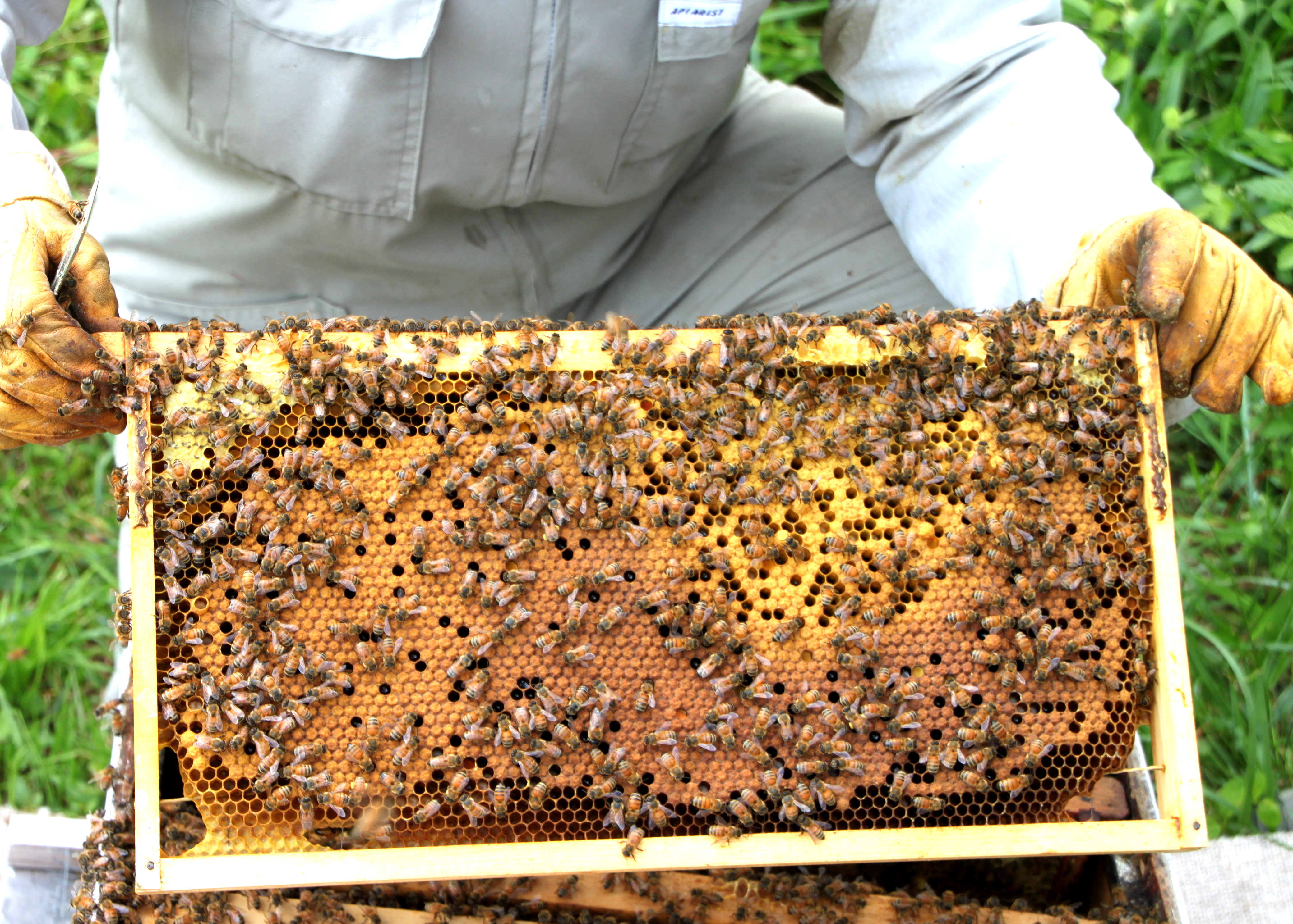 TillysNest-hive inspection2