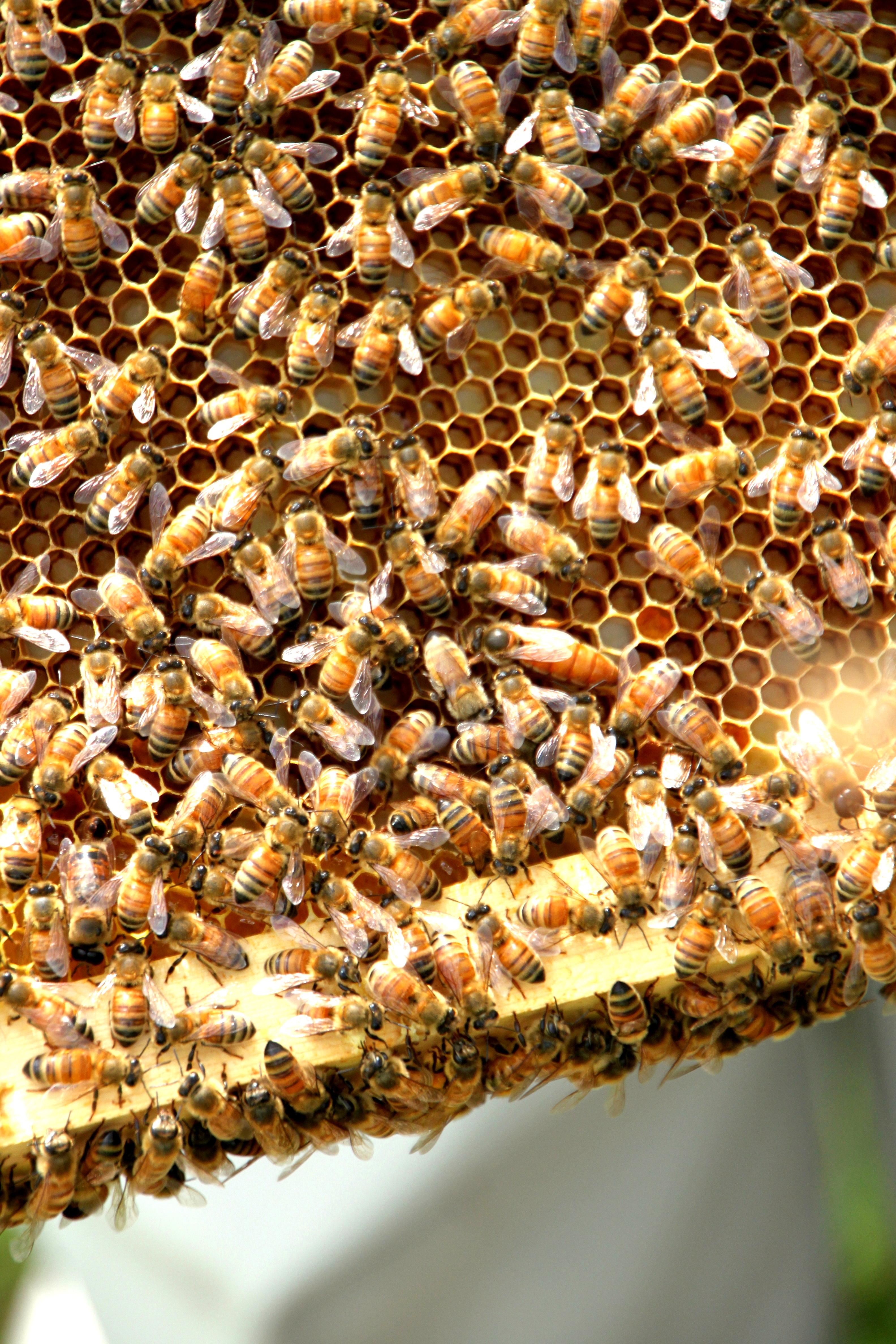 TillysNest-hive inspection3