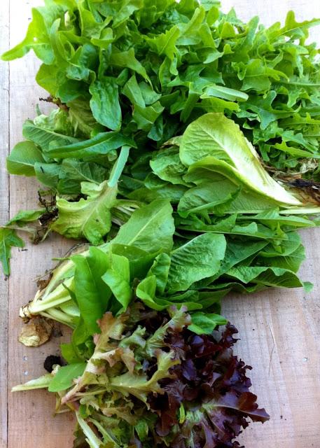 Companion planting lettuces