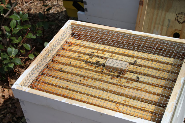 Requeen a beehive