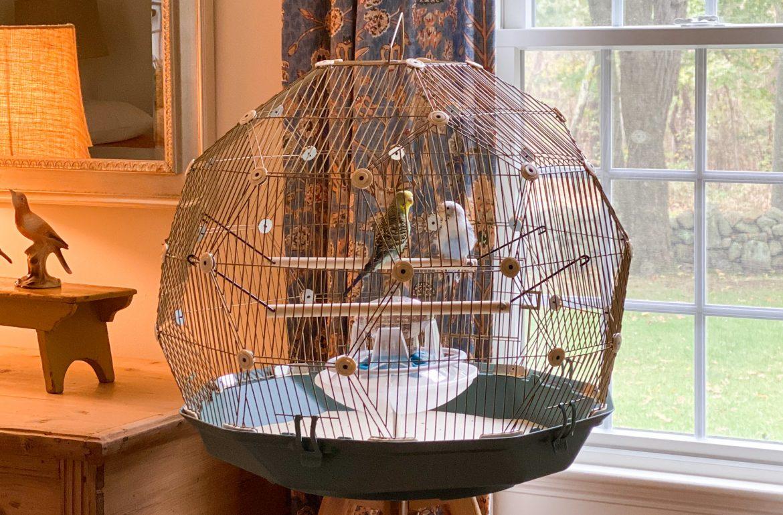 Caughey_Melissa_Original-Omlet-Geo-Bird-Cage-7