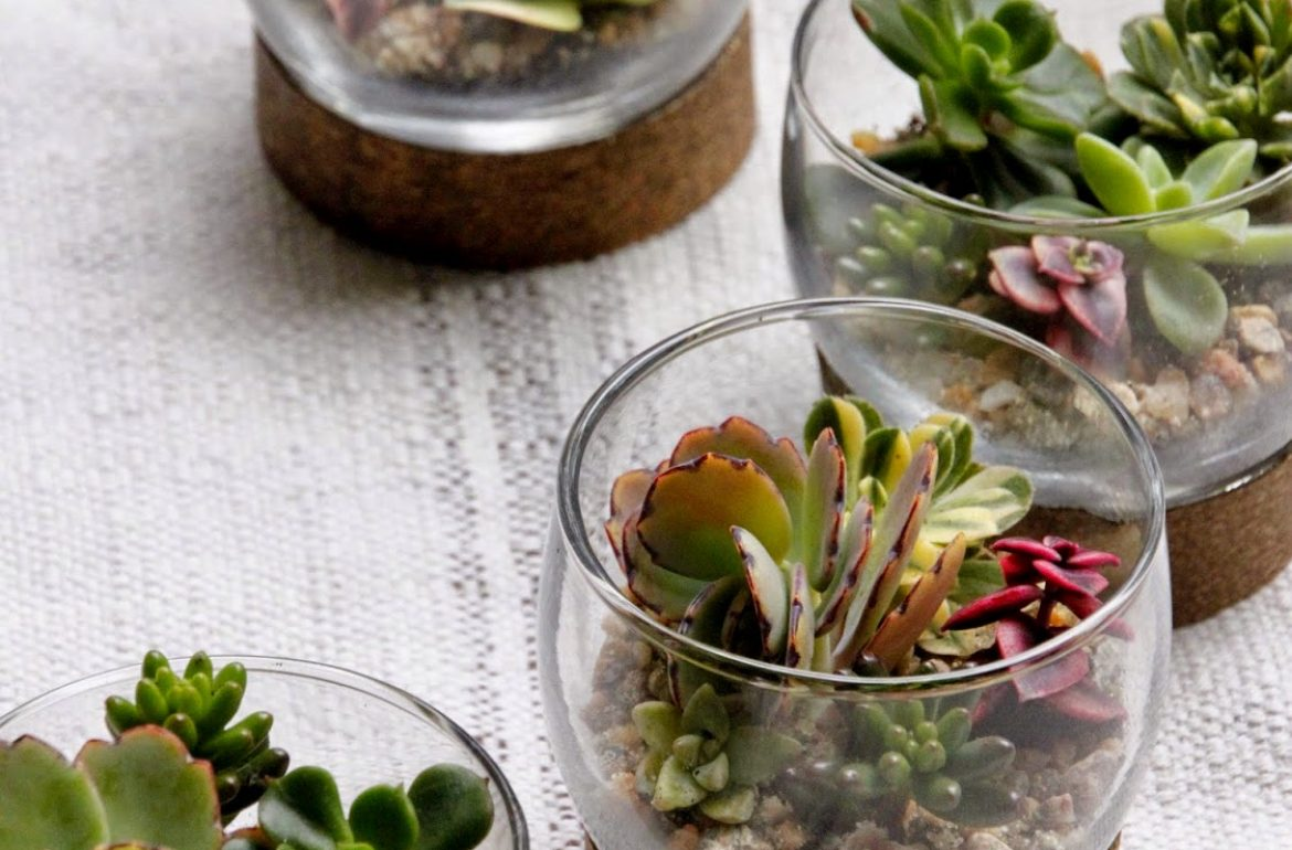 HGTV-MCaughey-mini-terrarium-tablesettings-003