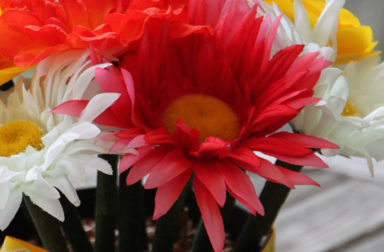 HGTV-MCaughey-penflowers9