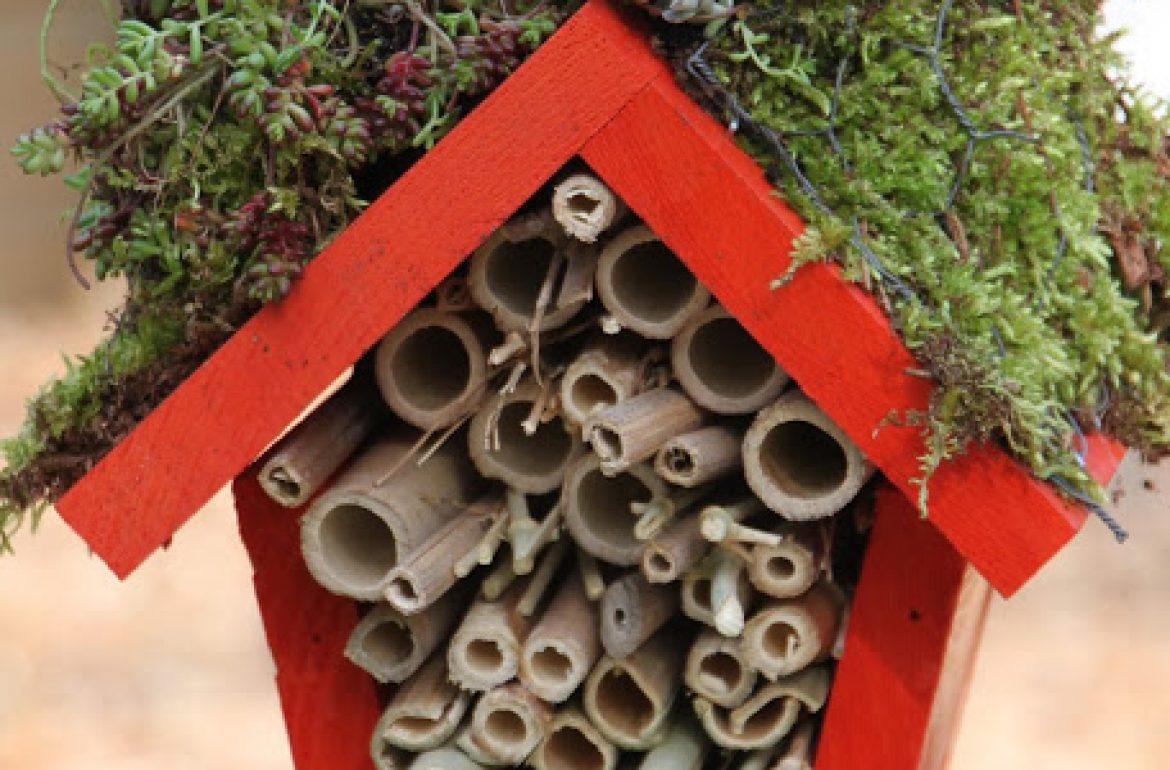 HGTV-ladybughotel7wp