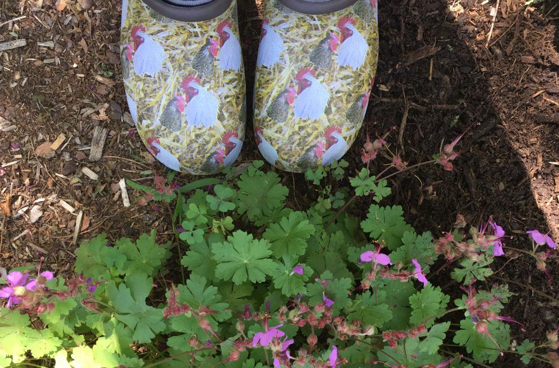 Original_Caughey-Melissa-backdoorshoes-chickens