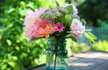 Original_Caughey-Melissa-dahlias