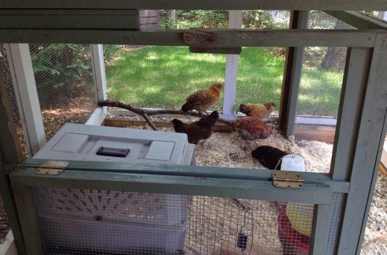 Tillys-Nest-brooder