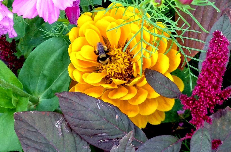 Tilly's Nest- bumblebee-001 (1)wp