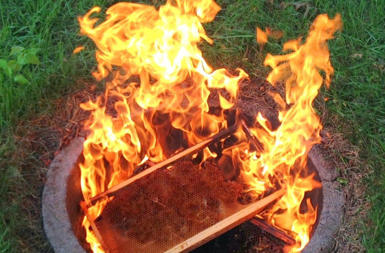 Tillys-Nest-burning-frames-from-beehive-001