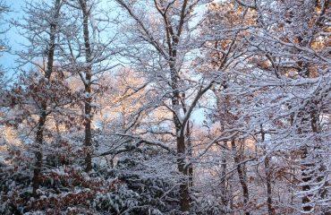 Tillys-Nest-coop-after-snow-morning-sunrise