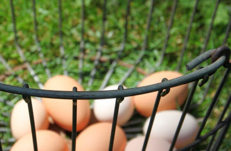 Tillys-Nest-egg-basket1