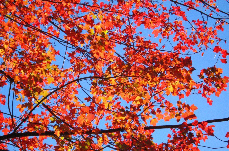 Tillys-Nest-fall-leaves