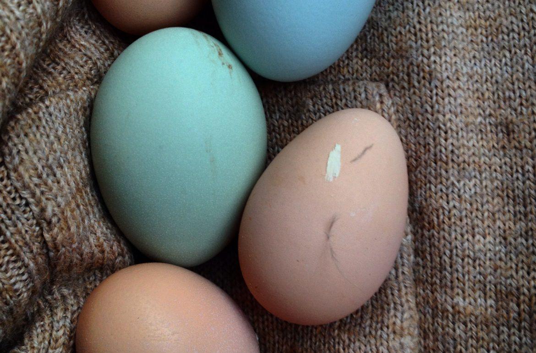 Tilly's Nest- fresh eggs