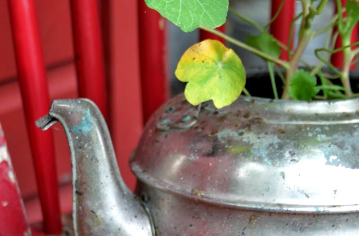 Tillys-Nest-kettle-with-nasturtium