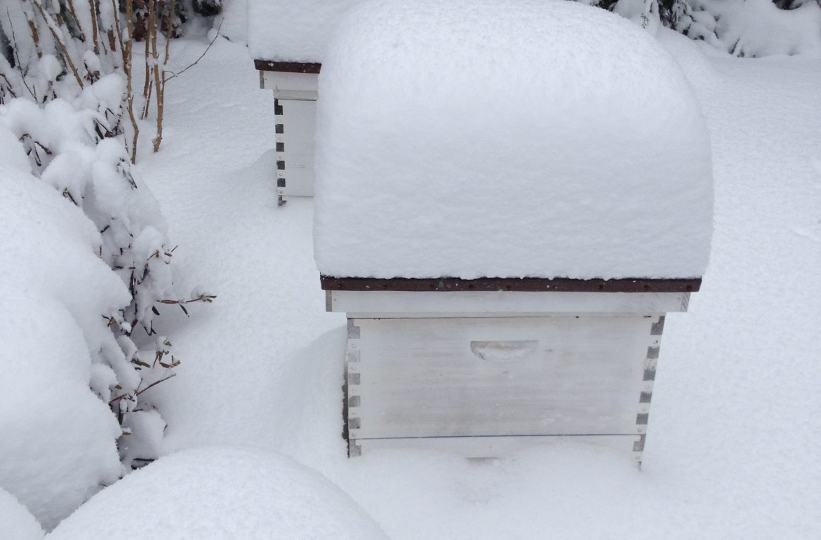 Tilly's Nest- snow covered beehive
