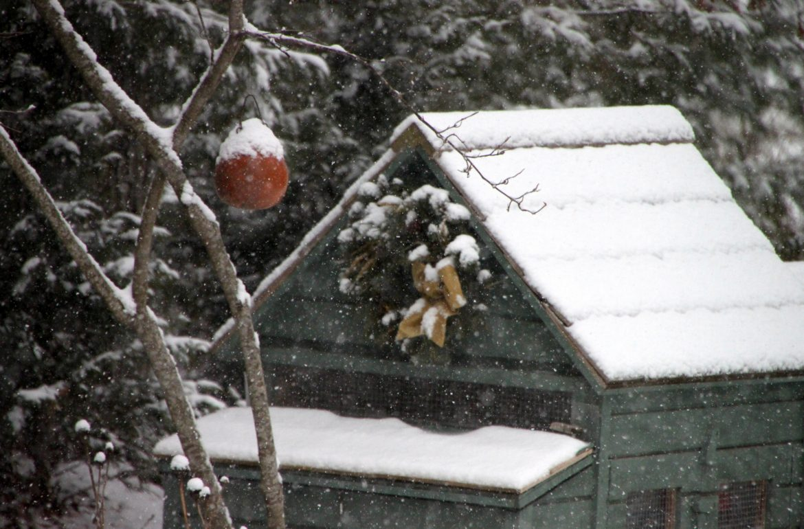 Tilly's Nest-snowy chicken coop