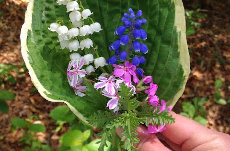 Tilly's Nest- tilly's flowers (1)wp