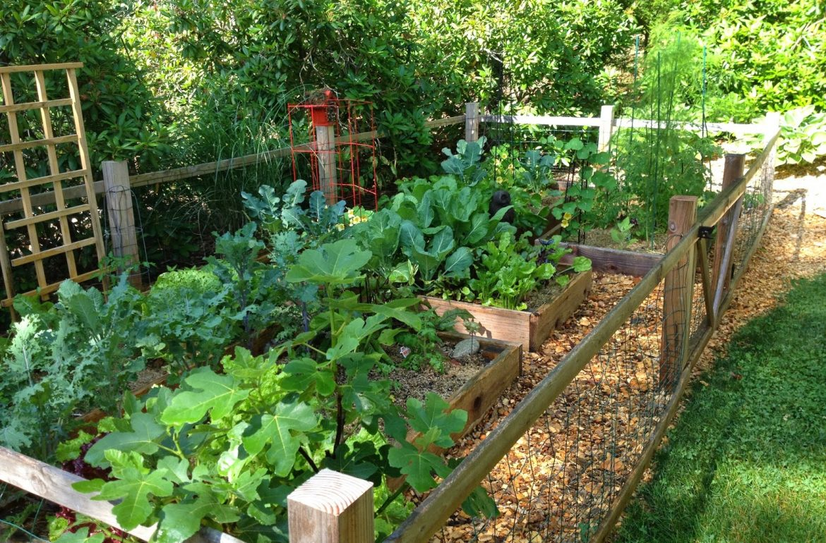 Tillys-Nest-vegetable-garden