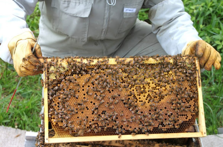 TillysNest-beekeepingbroodpattern