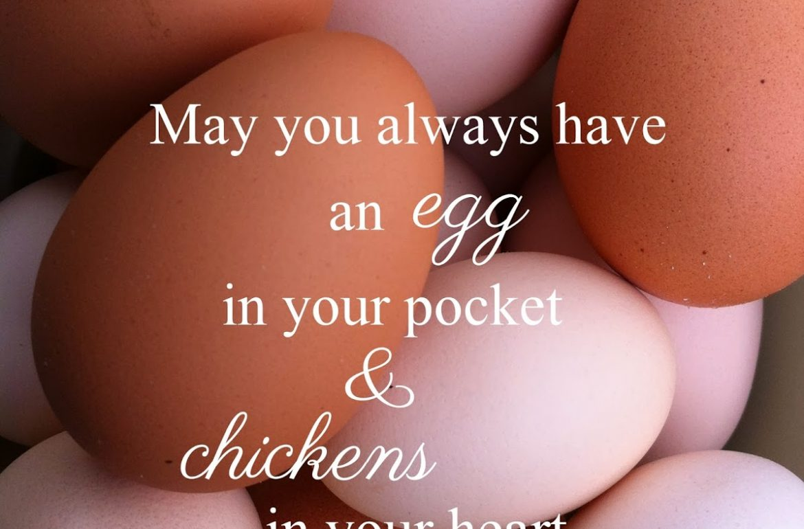 TillysNest-eggs-in-your-pocket-saying