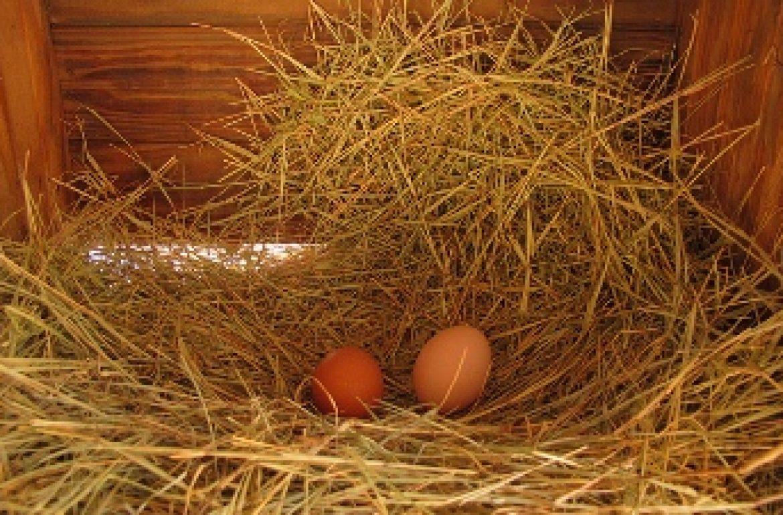 eggs_paulus_350.jpg