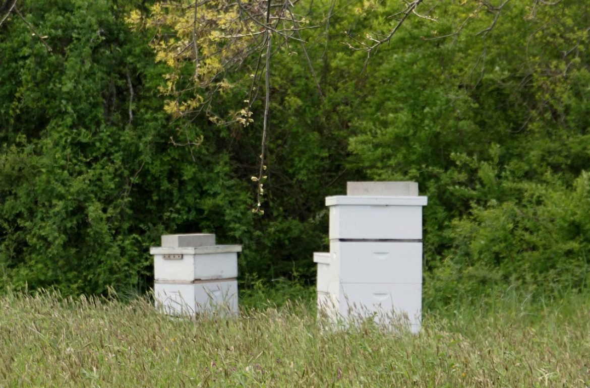 long-pasture-beehive-opening